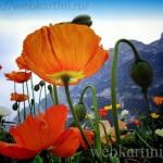 Картины цветов